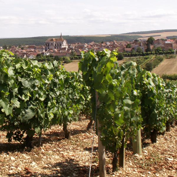 coulanges la vineuse vignoble auxerrois yonne