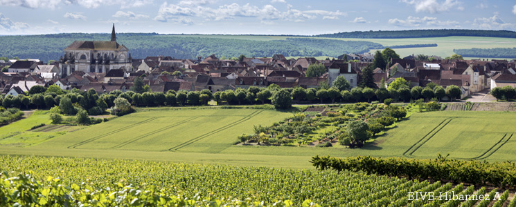 Pays Coulangeois vignoble coulanges la vineuse yonne