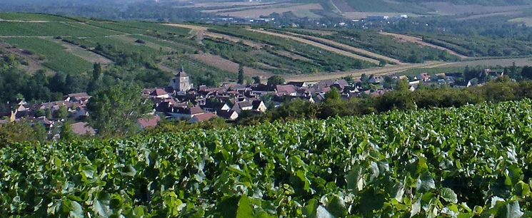 Jussy Pays Coulangeois vignoble cerise yonne